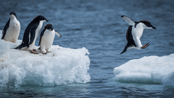 Exec Sees UKCS Jump with Shell Penguins Contract