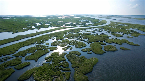 louisiana group  expedite coastal restoration  too