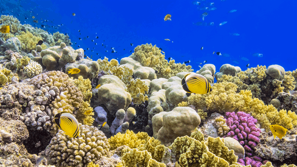 Shell's Cougar Platform Becomes Artificial Reef